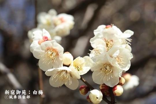 gardening_3907.JPG