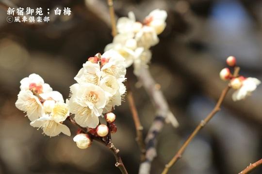 gardening_3908.JPG