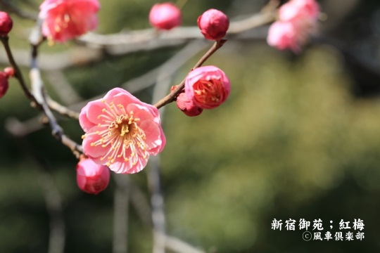 gardening_3910.JPG