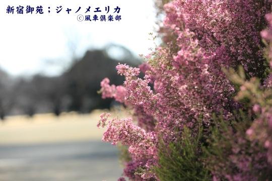 gardening_3911.JPG