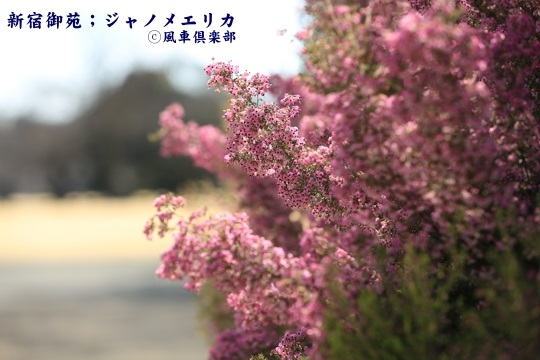gardening_3912.JPG