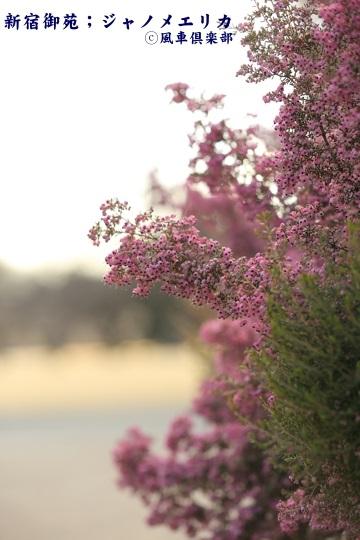 gardening_3913.JPG