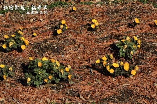 gardening_3914.JPG