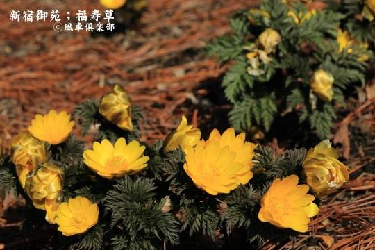 gardening_3915.JPG