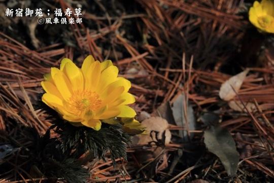 gardening_3916.JPG