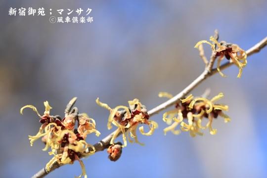 gardening_3917.JPG