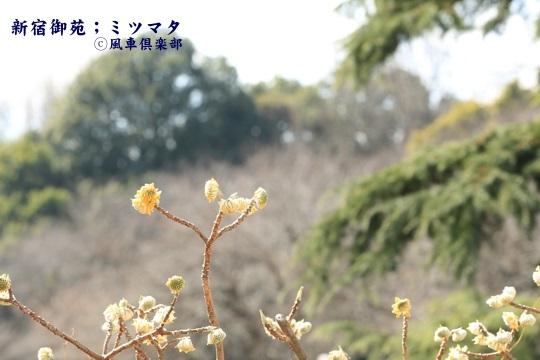 gardening_3918.JPG