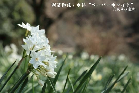gardening_3919.JPG