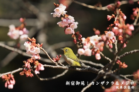 gardening_3920.JPG