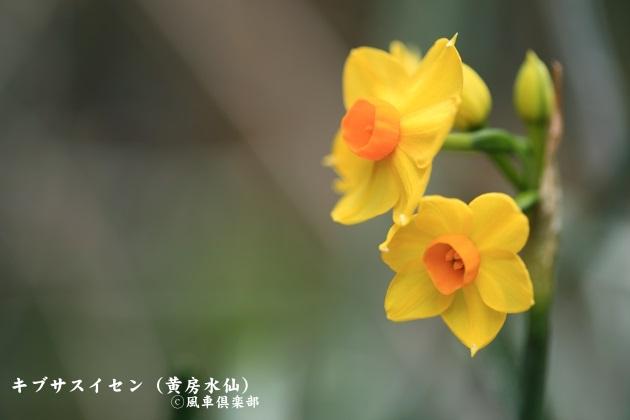gardening_3937.jpg
