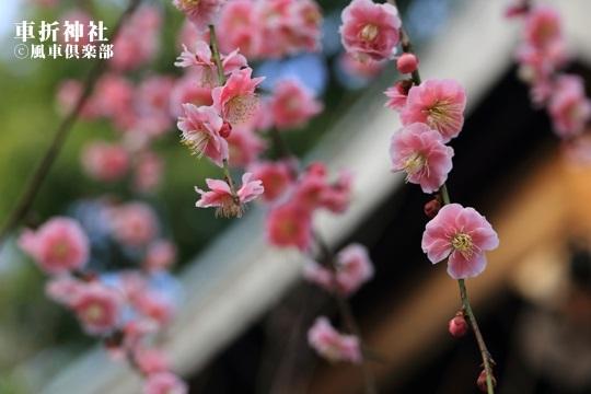 gardening_3975.JPG