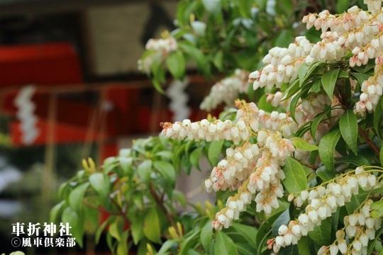 gardening_3980.JPG