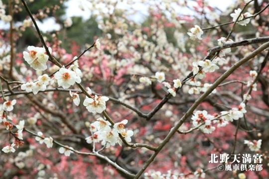 gardening_3985.JPG