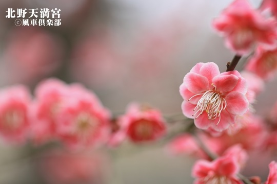 gardening_3987.JPG