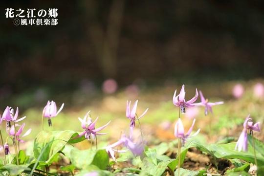 gardening_3992.JPG