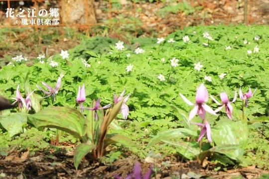 gardening_3995.JPG