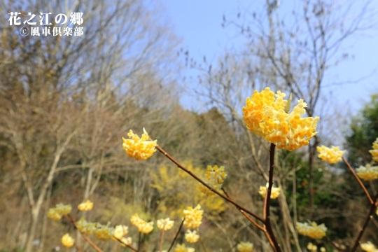 gardening_3997.JPG