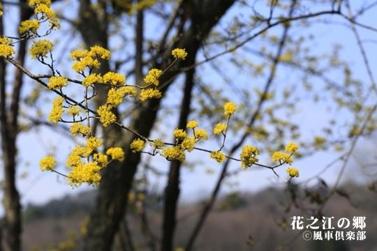 gardening_3999.JPG