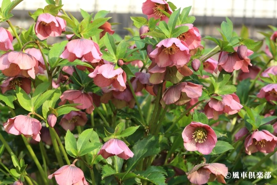gardening_4016.JPG
