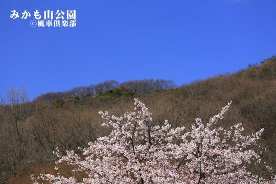 gardening_4019.JPG