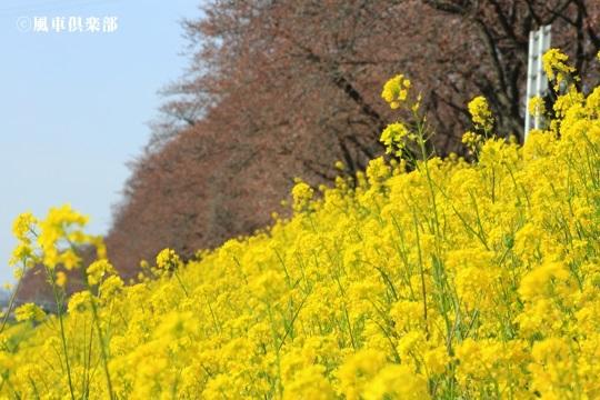 gardening_4028.JPG
