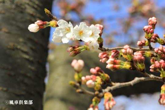 gardening_4030.JPG