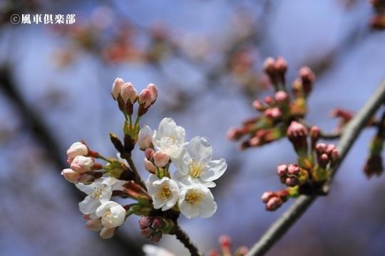 gardening_4031.JPG