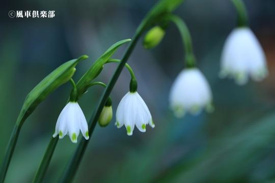 gardening_4032.JPG