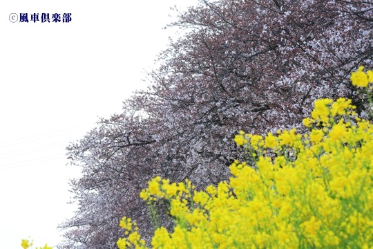 gardening_4033.jpg