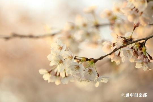 gardening_4034.jpg