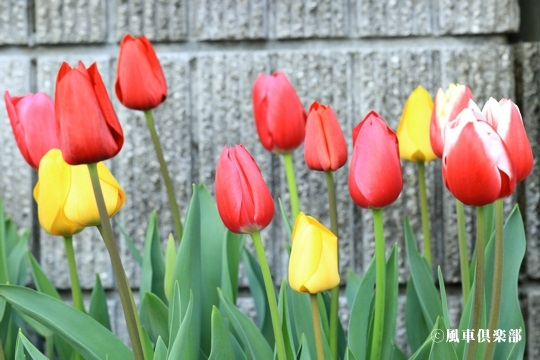 gardening_4065.jpg