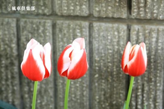 gardening_4066.jpg
