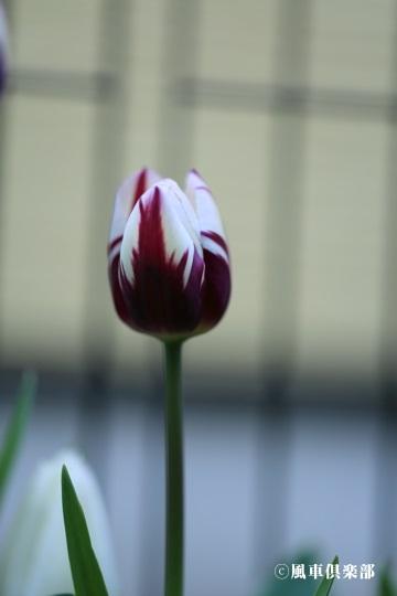 gardening_4069.jpg