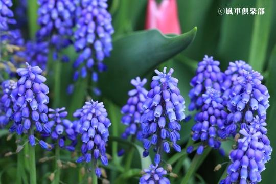 gardening_4070.jpg