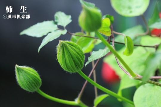 gardening_4073.jpg
