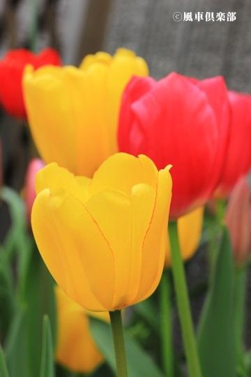gardening_4075.JPG