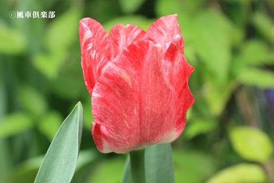 gardening_4078.JPG