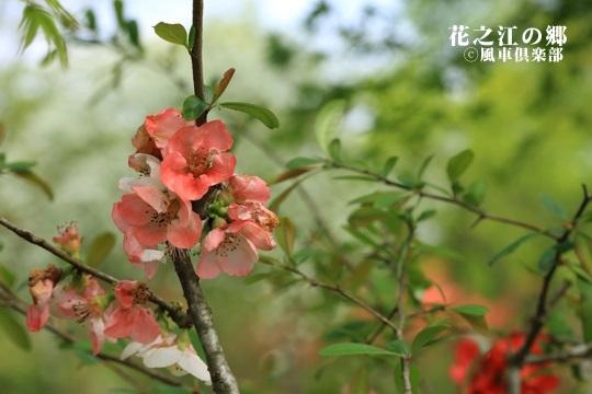 gardening_4085.JPG