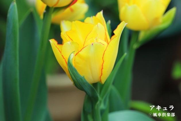 gardening_4094.JPG