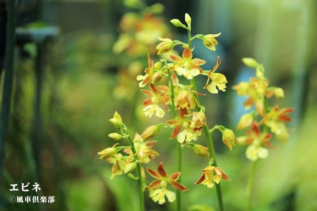 gardening_4095.JPG
