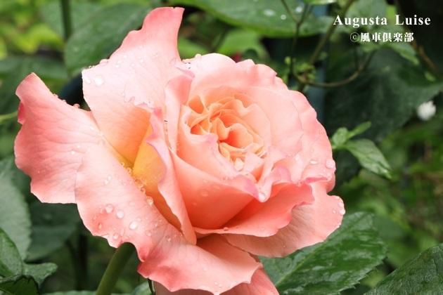 gardening_4148.JPG
