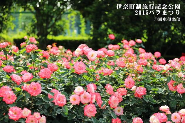 gardening_4164.JPG