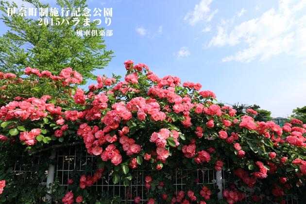 gardening_4166.JPG