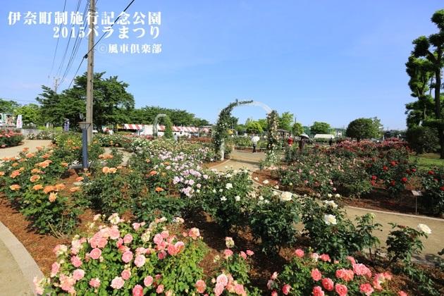 gardening_4167.JPG