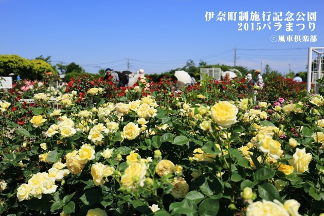 gardening_4169.JPG