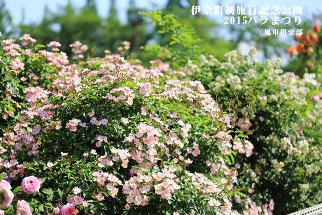 gardening_4170.JPG