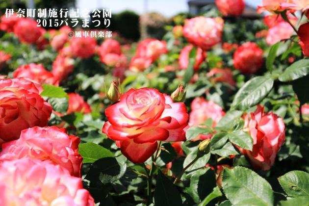 gardening_4171.JPG