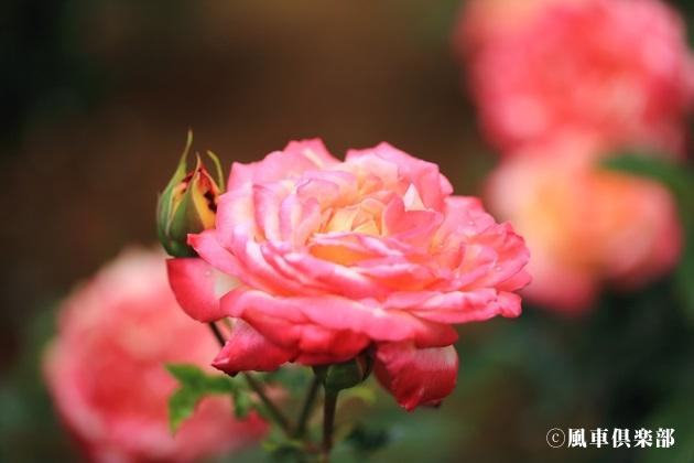 gardening_4172.JPG