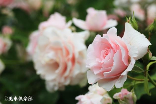 gardening_4173.JPG