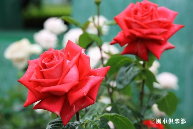 gardening_4174.JPG
